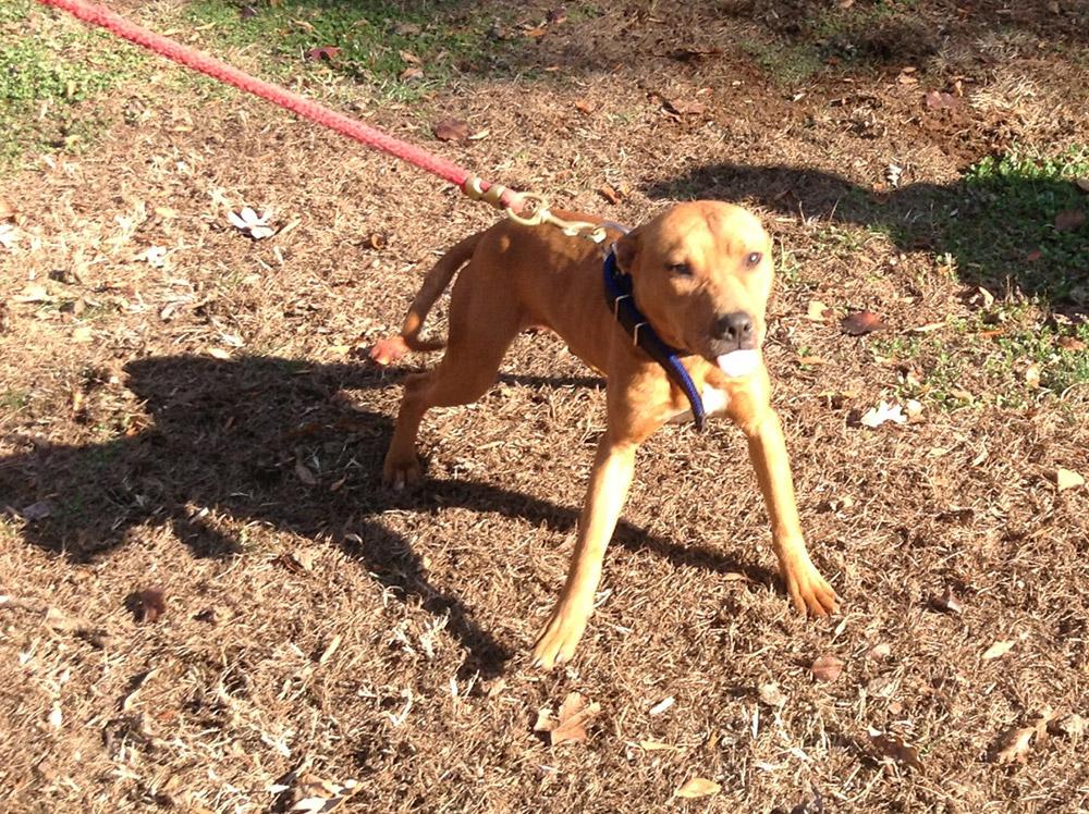 Caesar x Miss Simba II Pups - Tom Garner Kennels