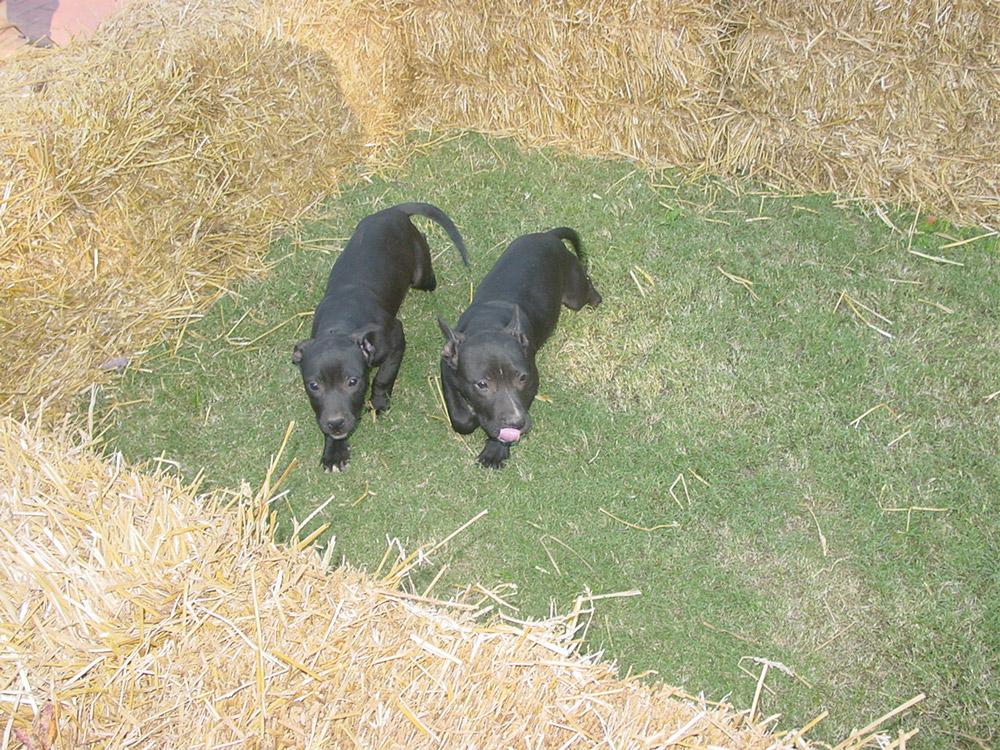 Dog Kennels Peru Il