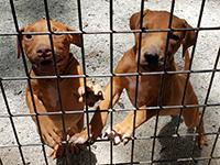 Tom Garner kennels - current pups